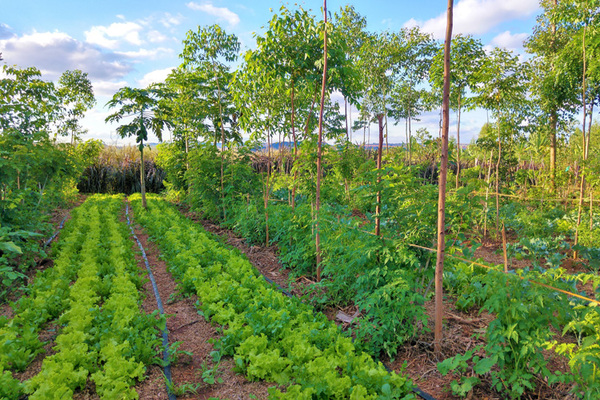 Garden with rows of trees, rows of vegetables, and rows of plants, all spaced out and orderly.